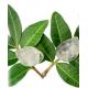 "Kramtomoji guma ""MASTIHA"" mandarinų skonio, becukrė (Mediterra SA, Graikija)"